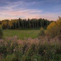Вечерняя поляна :: Владимир Макаров
