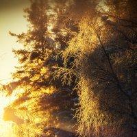 Морозное утро :: Роман Дудкин