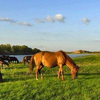 Золотоордынский конь близ Сарая :: Иван