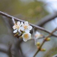 Весна идет! :: Оля Богданович