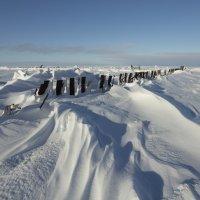 Северодвинск. Белое море сегодня (3) :: Владимир Шибинский