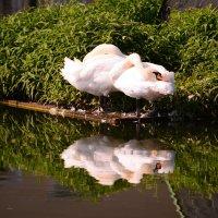 Грациозные птицы :: Светлана Ларионова