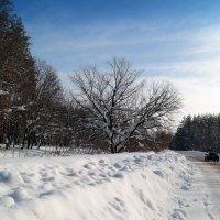 По зимним дорогам.. :: Андрей Заломленков