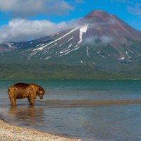 В ожидании лосося :: Денис Будьков