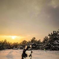закат :: Александр Михненко