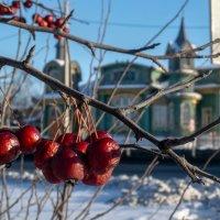 Зимние витаминчики :: Марина Ломина