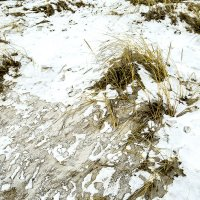 Останки Зимы :: Gennadiy Karasev