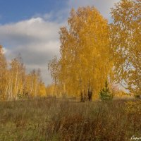 Золотая осень :: berckut1000