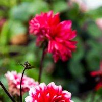 Flowers :: Sergey Sergaj