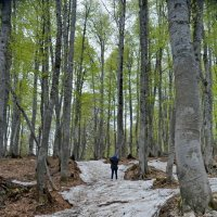 В лесу :: Николай