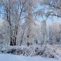 В снежном уборе. :: Наталья Юрова