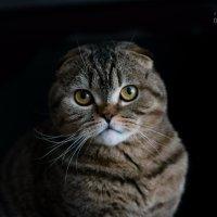 Королевская важность! :: Оксана Романова