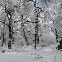 Кружится вновь снежинок хоровод :: Наталья Джикидзе (Берёзина)