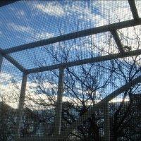 Февральское небо в клеточку :: Нина Корешкова