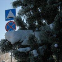 Cе настоящий снег на искуственных иголках :: Михаил Полыгалов