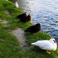 Птички на берегу :: Karolina