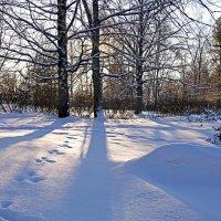 Зимнее с солнышком :: Наталья