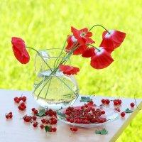 Лето  красное - прекрасное! :: Наталья Казанцева