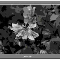 Цветы.2007. :: Алексей Халдин