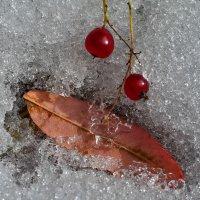 Первый снег :: Татьяна Соловьева