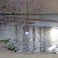 Большой пруд в Оранинбауме :: alemigun