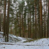 Про лес :: leo yagonen