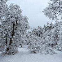 Ажур зимы :: Наталья Джикидзе (Берёзина)