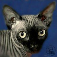 А вы знаете как мяукают японские кошки?.. :: Кай-8 (Ярослав) Забелин