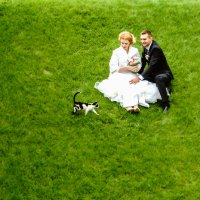 Лето. Свадьбы.Кошки :: Андрей Липов