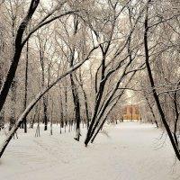 У зимнего пруда... :: Sergey Gordoff