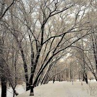 На зимней аллее... :: Sergey Gordoff