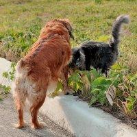 Как кошка с собакой!.. :: Алексей Бубнов