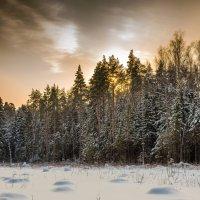 Зимний пейзаж. :: Владимир Лазарев