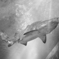 В аквариуме :: Kristina Suvorova