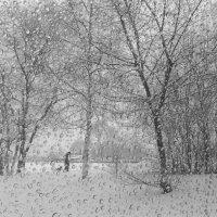 Прогулка в непогоду.. :: Тамара Морозова