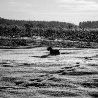 Winter :: Света Гончарова