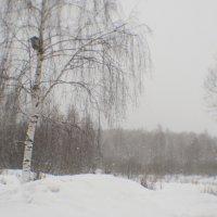 Февральский снегопад 2 :: Владимир Носов
