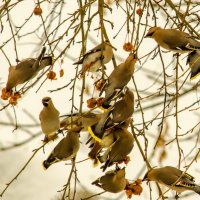 Птичий рынок! :: Борис Кононов
