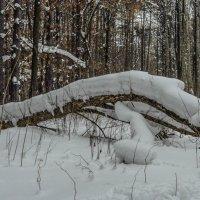 заснеженный лес :: Юлия Денискина
