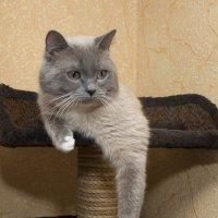 """ Принц "" :: Олег Савин"