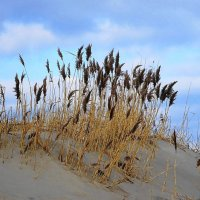 Морское побережье в феврале :: Маргарита Батырева