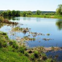 Готовит май июньское тепло... :: Лесо-Вед (Баранов)