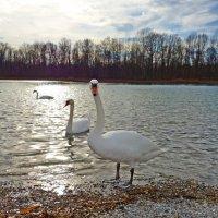 Степенные, яркие, нежные птицы... :: Galina Dzubina