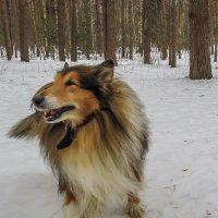 Старый добрый пес :: Сергей Цветков