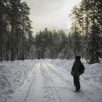 В лесу :: Василий Ахатов