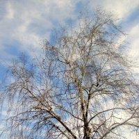 Зимнее небо :: Нина Бутко