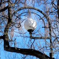 Фонарь на Пушкинской улице :: Нина Бутко