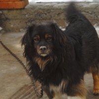 Тяжела собачья жизнь... :: владимир
