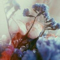 Розы :: Тамара Кузьмина