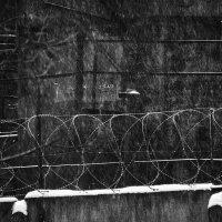 снегопад на фоне промзоны :: Максим Должанский